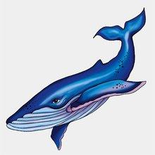 Наклейки на тело кит